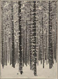 Forêt de sapins en hiver - 1951